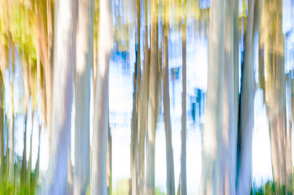 Photograph - Moving Trees II-1 by Gene Norris