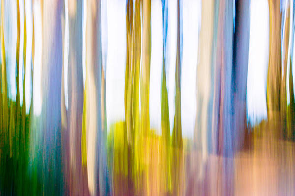 Photograph - Moving Trees I-2 by Gene Norris