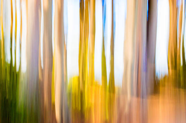 Photograph - Moving Trees II Saturated by Gene Norris