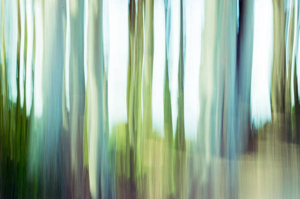 Photograph - Moving Trees 3-4 by Gene Norris