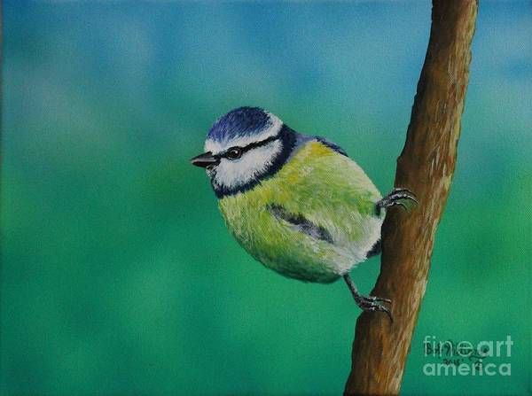 Painting - Mr. Agile........the Blue Tit by Bob Williams