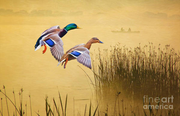 Marshland Photograph - Mr. And Mrs. Mallard by Laura D Young