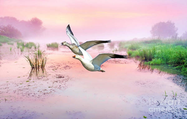 Snow Goose Photograph - Mr. And Mrs. Snow Goose by Laura D Young