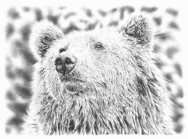 Drawing - Mr. Bear by Remrov