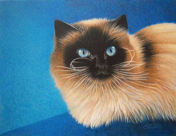 Drawing - Mr. Blue by Pamela Clements