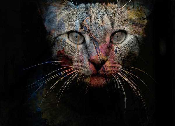 Colourful Photograph - Mr Bo by Paul Lovering