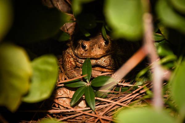 Photograph - Mr Frog by Alessandro Della Pietra