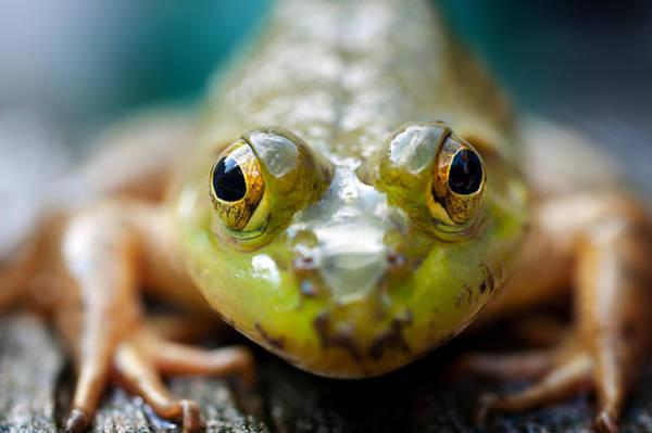 Photograph - Mr Frog by Dick Pratt