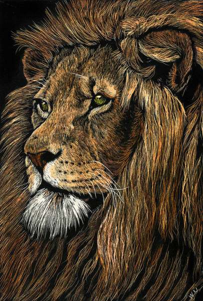 Drawing - Mr. Majestic by William Underwood