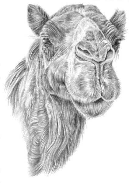 Mr Rak Camel Art Print