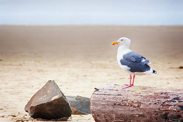 Photograph - Mr. Seagull by Dee Browning
