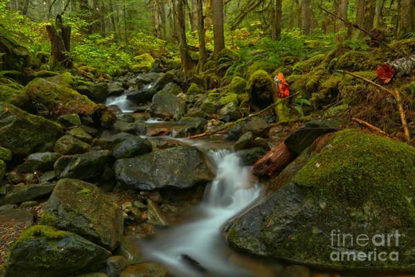 Photograph - Mt Baker Wilderness by Adam Jewell