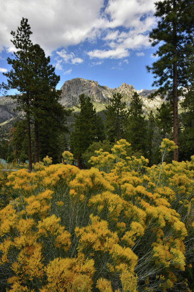 Photograph - Mt. Charleston Natural Area by Ray Mathis