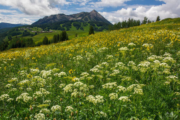 Photograph - Mt. Crested Butte Wildflowers by Aaron Spong