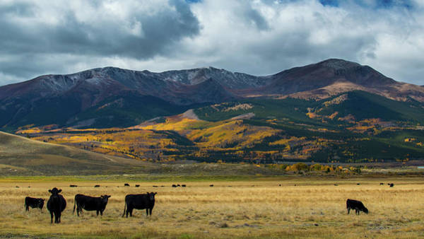 Photograph - Mt. Elbert by Stephen Holst