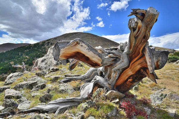 Photograph - Mt. Evans Dinosaur II by Ray Mathis