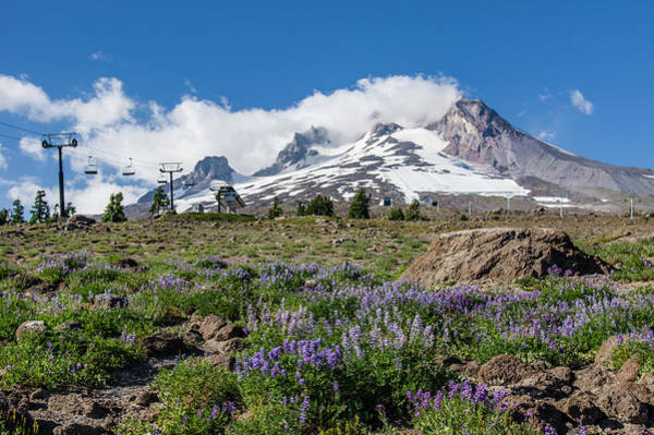 Wall Art - Photograph - Mt Hood And Lupines From Pacific Crest Trail by John Trax