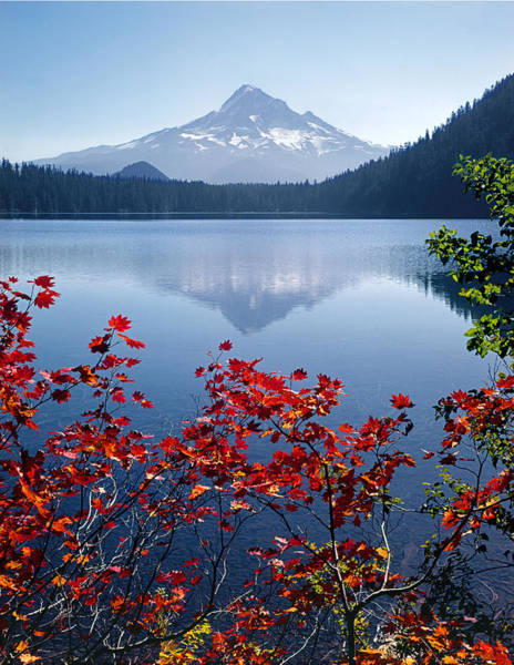 Photograph - 1m5107-v-mt. Hood From Lost Lake  by Ed  Cooper Photography