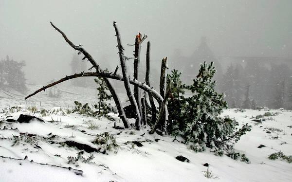 Photograph - Mt Hood Snow by Albert Seger