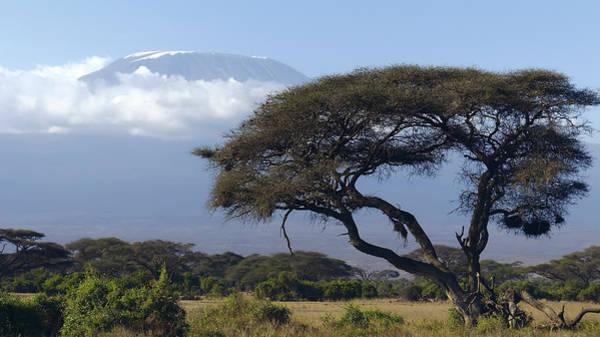 Wall Art - Photograph - Mt Kilimanjaro Africa by Daniel Hagerman