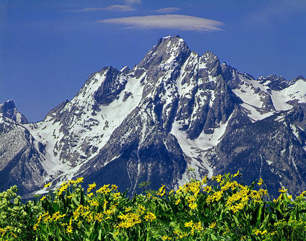 Photograph - 1m9224-mt. Moran  by Ed  Cooper Photography