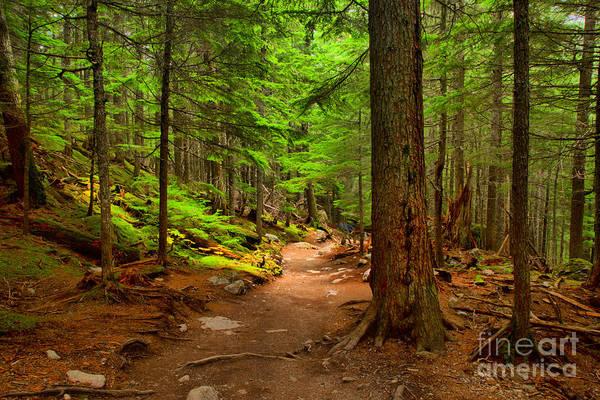 Photograph - Mt Rainier Forest Path by Adam Jewell