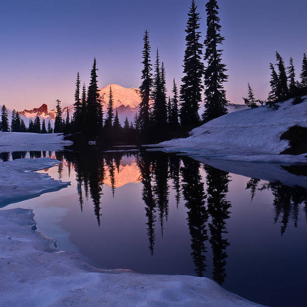 Wall Art - Photograph - Mt Rainier From Lake Tipsoo by Alvin Kroon