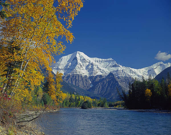Photograph - 1m2438-h-mt. Robson And Fraser River In Autumn  by Ed  Cooper Photography