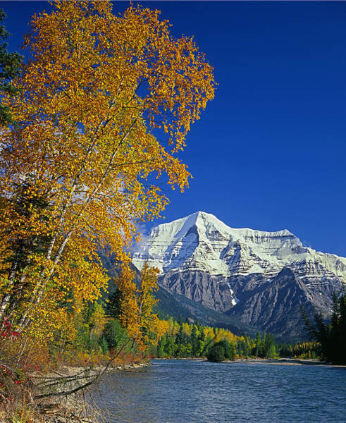 Photograph - 1m2439-v-mt. Robson And Fraser River In Autumn   by Ed  Cooper Photography