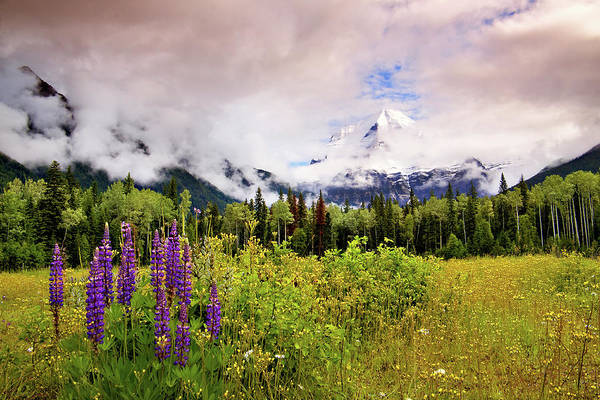 Rockies Digital Art - Mt. Robson And Lupens by Julius Reque