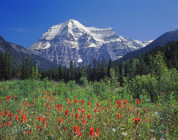 Photograph - 1m2426-h-mt. Robson With Paintbrush  by Ed  Cooper Photography