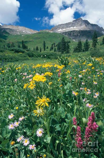 Photograph - Mt. Sneffels Wilderness, Colorado by Adam Jones