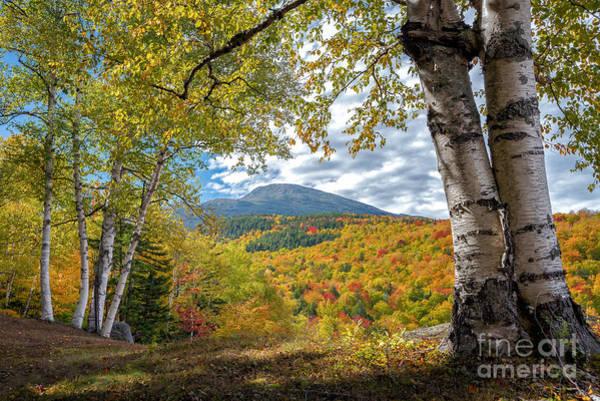 Mt. Washington Photograph - Mt Washington And Birches by Scott Thorp