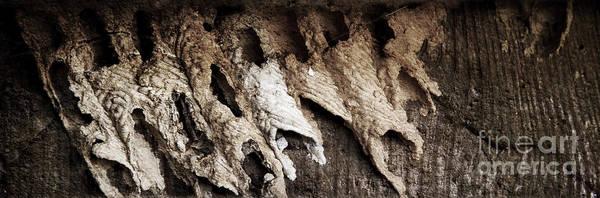 Photograph - Mud Dauber by Pete Hellmann