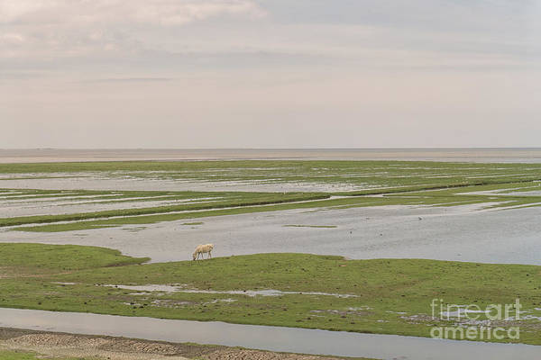 Wall Art - Photograph - Mud Flats In The North Of The Netherlands by Patricia Hofmeester