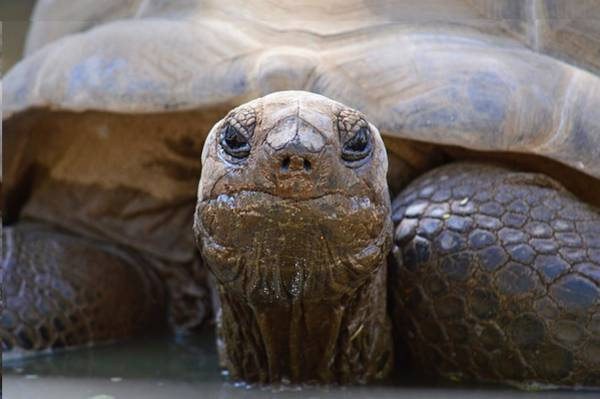 Photograph - Mud Mask - Aldabra by KJ Swan