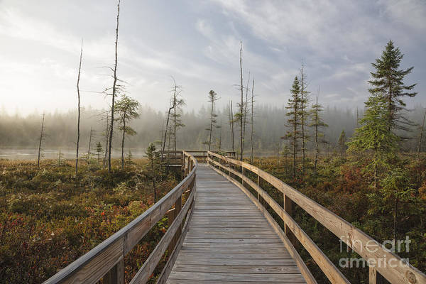 Photograph - Mud Pond - Jefferson New Hampshire by Erin Paul Donovan