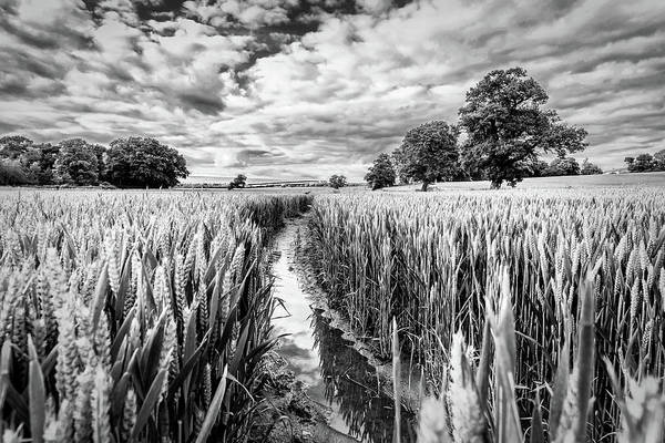 Photograph - Muddy Path by Nick Bywater