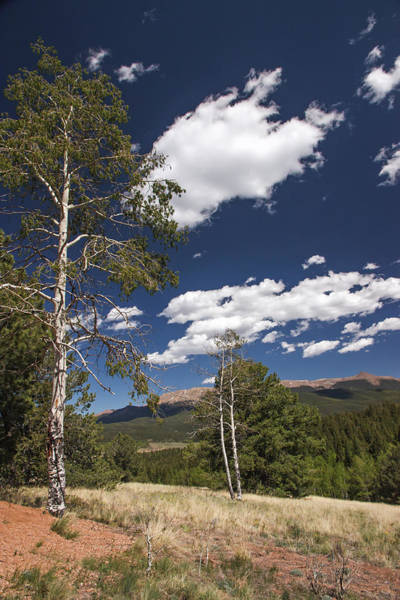 Photograph - Mueller State Park by Lon Dittrick