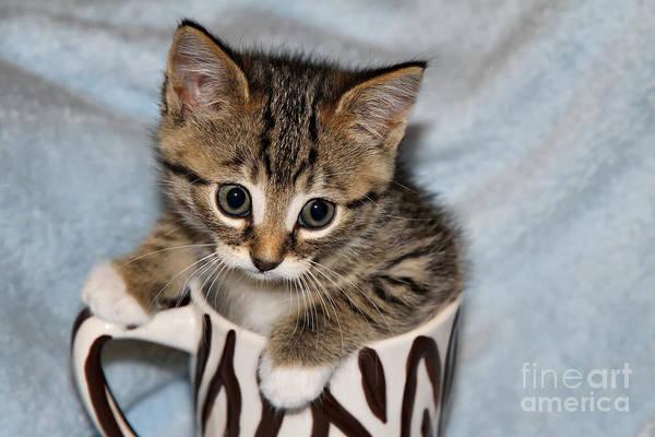 Coffee Mug Photograph - Mug Kitten by Teresa Zieba