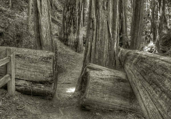 Photograph - Muir Throughcut by Michael Kirk