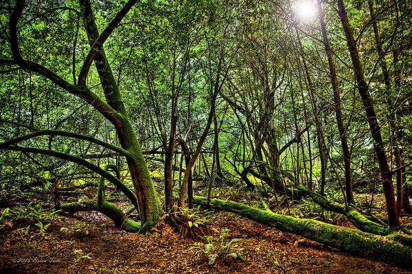 Photograph - Muir Woods Rejuvenation by Brian Tada