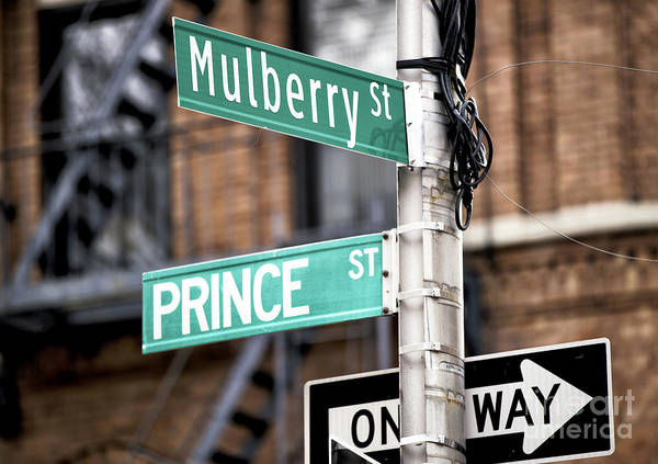Photograph - Mulberry And Prince by John Rizzuto