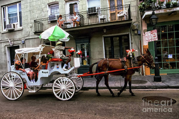 Photograph - Mule And Buggy New Orleans by Thomas R Fletcher