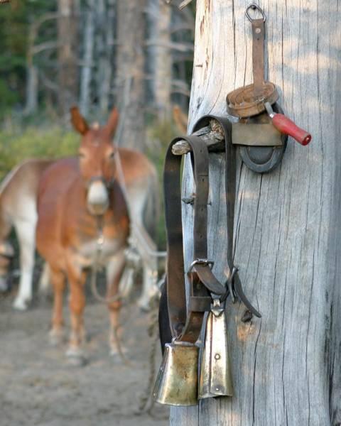 Mule Bells Art Print