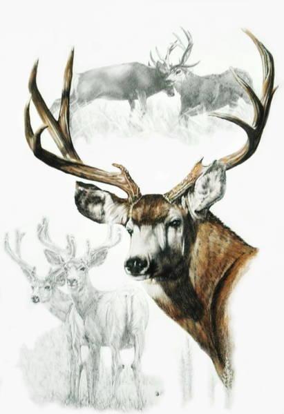Mixed Media - Mule Deer by Barbara Keith