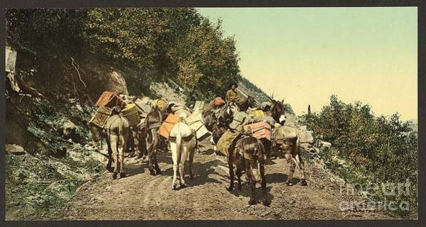 Wall Art - Photograph - Mule Pack Train In Colorado by Pd