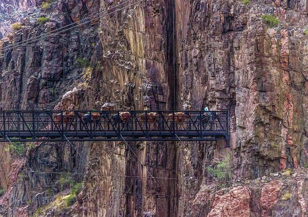 Photograph - Mule Train On Black Bridge, Grand Canyon by Pete Hendley