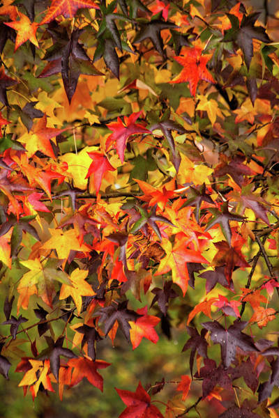 Wall Art - Photograph - Multi Color Autumn by Karol Livote