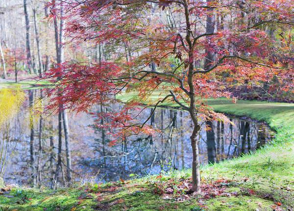 Multi Color Japanese Maple Art Print